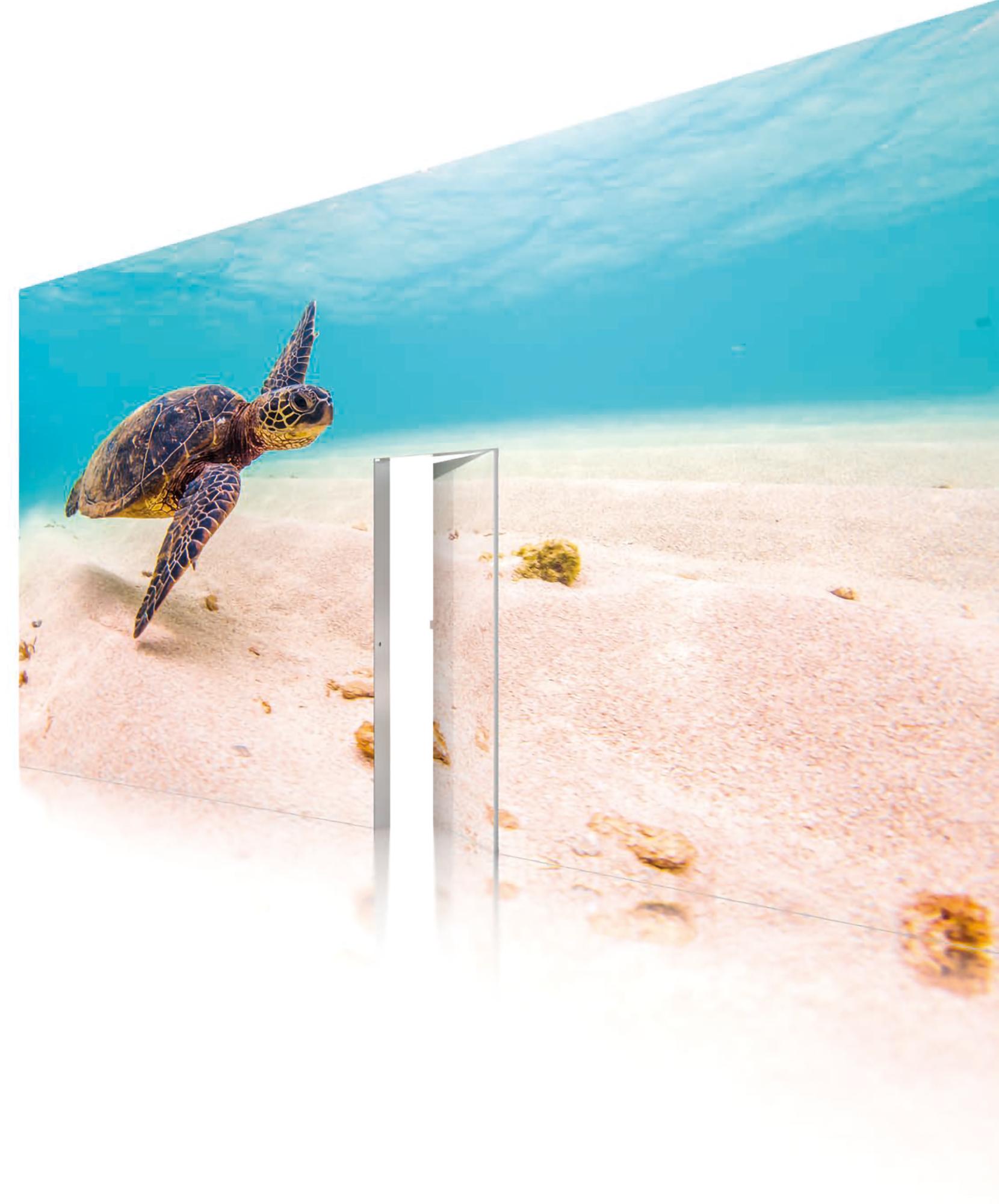 Octalumina Plus Schildkröte